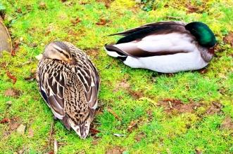 Birdland 010418 (135)