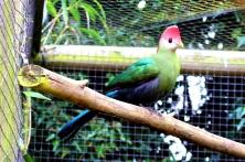 Birdland 010418 (17)