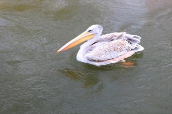 Birdland 010418 (172)