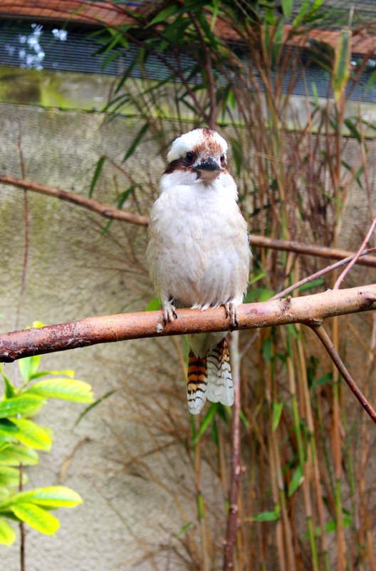 Birdland 010418 (46)