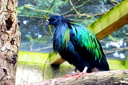 Birdland 010418 (49)