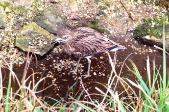 Birdland 010418 (74)