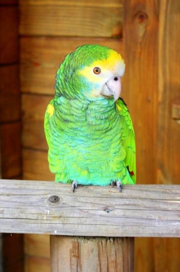 Birdland 010418 (86)