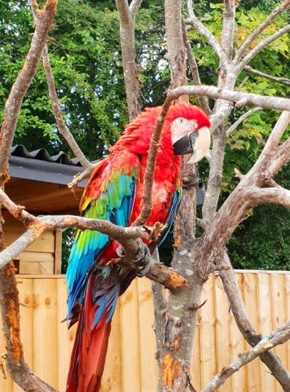 Exotic Zoo (1)