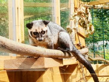 Exotic Zoo (2)