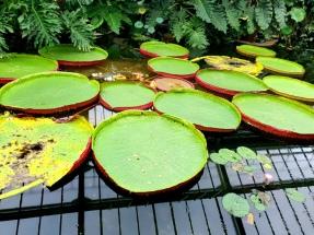 Kew Gardens (30)