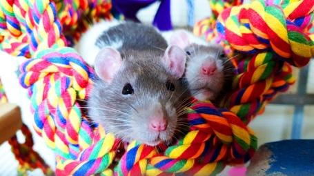 Rat Boys (1)