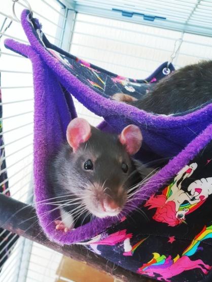Rat Boys (3)