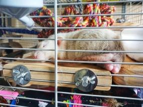 Rat Boys (7)