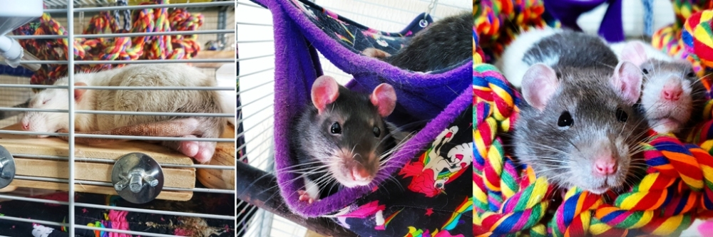 Rat Boys