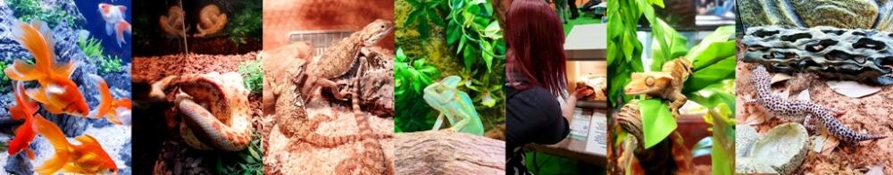 Reptiles (32)
