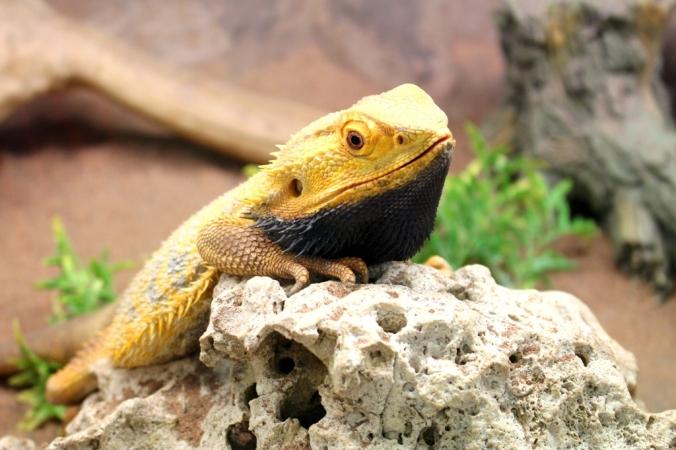 Rodbaston Animal Zone (11)