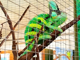 Rodbaston Animal Zone (17)