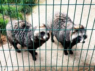 Rodbaston Animal Zone (21)