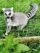 Rodbaston Animal Zone (24)