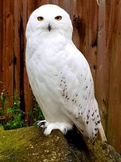 Scottish Owl Centre (10)