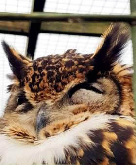Scottish Owl Centre (13)