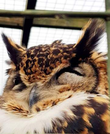 Scottish Owl Centre (13)