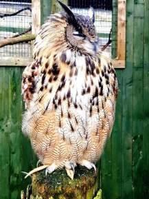 Scottish Owl Centre (3)
