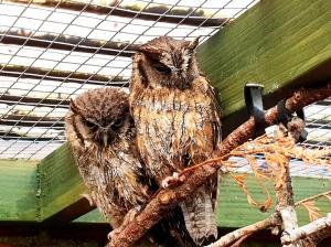 Scottish Owl Centre (3)
