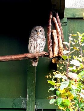 Scottish Owl Centre (4)