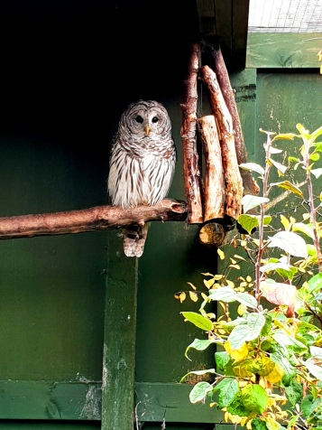 Scottish Owl Centre (4)