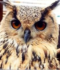Scottish Owl Centre (7)