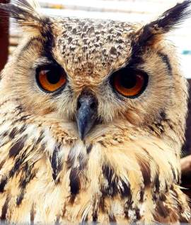 Scottish Owl Centre (7)