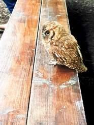 Scottish Owl Centre (8)