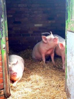 Sheldon Farm 140418 (1)