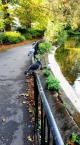 The Nottingham Arboretum (10)