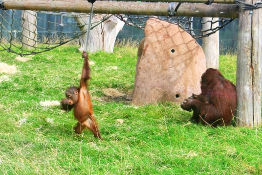 Twycross Zoo (3)