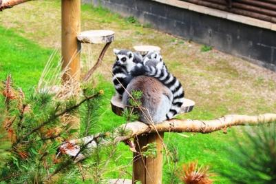 Twycross Zoo (4)