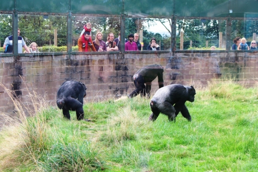 Twycross Zoo (5)