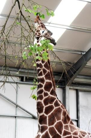 Twycross Zoo (6)