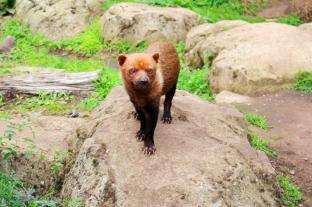 Twycross Zoo (8)