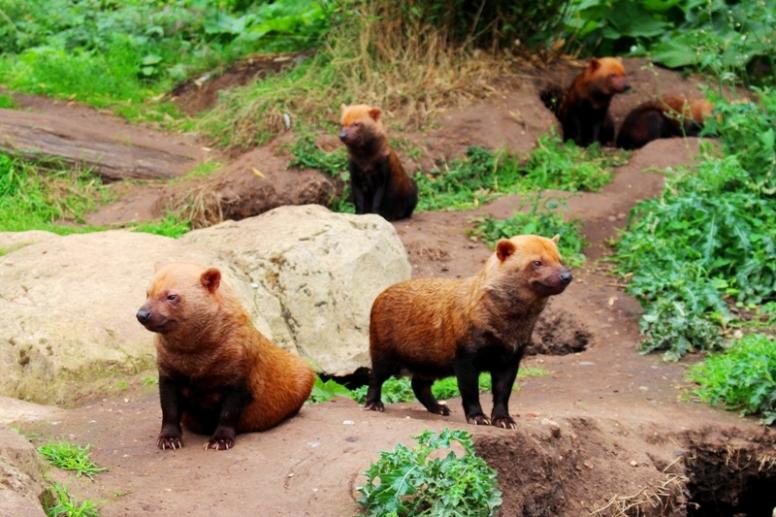 Twycross Zoo (9)