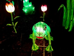 Magical Lanterns (18)