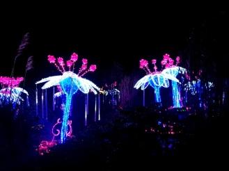 Magical Lanterns (24)