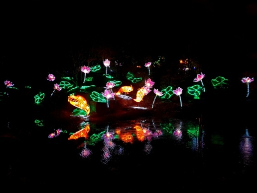 Magical Lanterns (31)