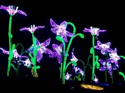 Magical Lanterns (43)