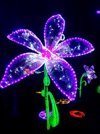 Magical Lanterns (47)