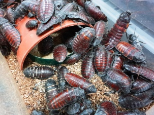 Midland Entomological Fayre (12)