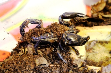Midland Entomological Fayre (17)