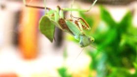 Midland Entomological Fayre (18)