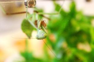 Midland Entomological Fayre (19)