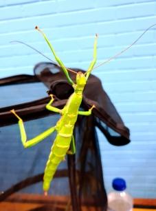 Midland Entomological Fayre (2)