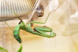 Midland Entomological Fayre (20)