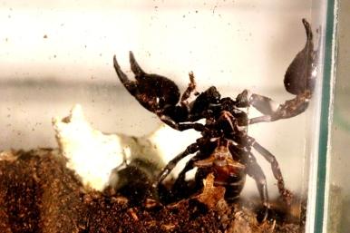 Midland Entomological Fayre (22)