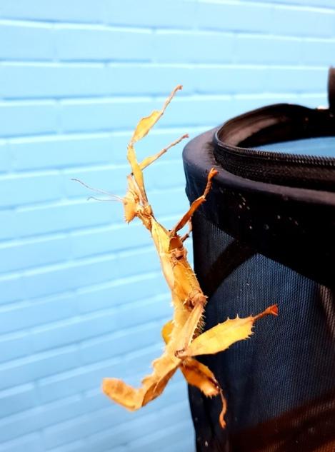 Midland Entomological Fayre (3)